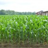 Colorado corn growers encouraged by Trump's statements on ethanol